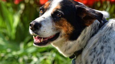 4 belangrijke zaken die bij de basisverzorging van je hond horen